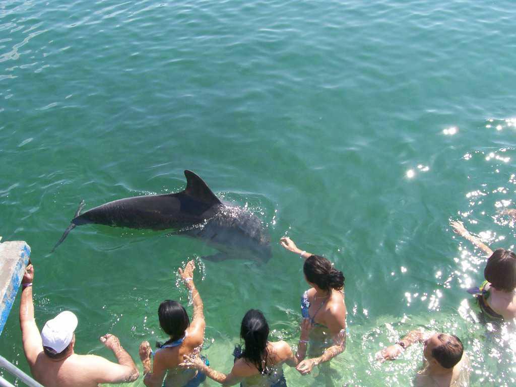Удоволствието да погалиш делфин, който си играе край теб, е несравнимо с нищо