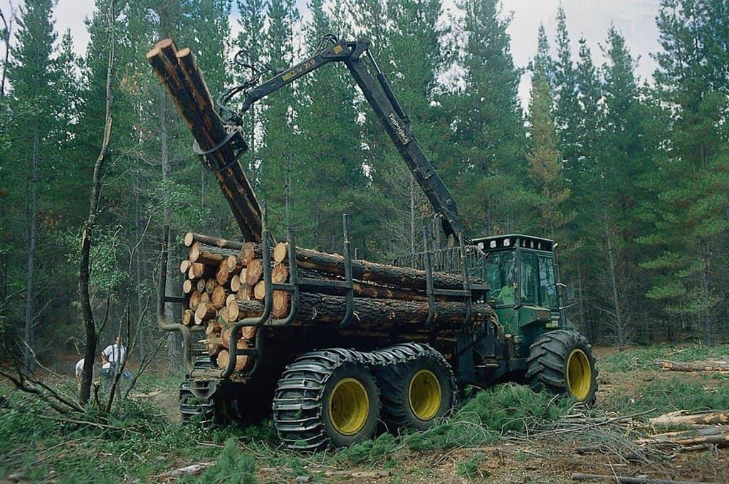 """""""Арауко"""" и """"Мининко"""" владеят 70% от горската индустрия в Чили. Снимка: Radio Universidad de Chile"""