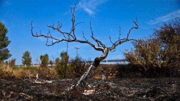 Тъжни скелети остават от изгорелите гори. Снимка: telesurtv.net