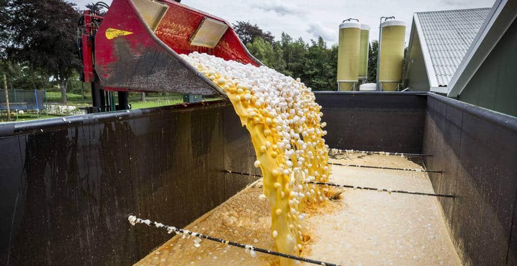 Германия унищожава отровните яйца. Снимка: EFE