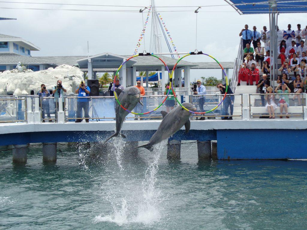 Питомниците на делфинариума в сайо Санта Мария знаят всякакви номера. Снимка: Къдринка Къдринова