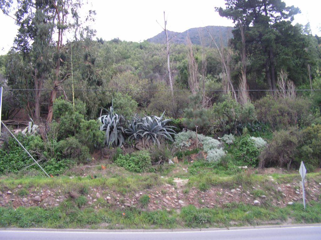 """В храстите ето на този хълм над шосето в района на Кахон дел Майпо """"българинът"""" Валенсуела Леви и другарите му са чакали кортежа на Пиночет, за да извършат атентата. Снимка: Къдринка Къдринова"""