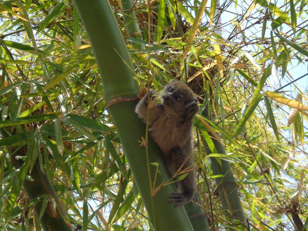 Още един бамбуков фен. Снимка: Къдринка Къдринова