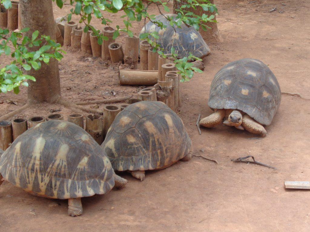 В същия парк има и достолепни грамадни костенурки. Снимка: Къдринка Къдринова