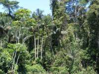 Амазонска гора / Снимка: Уикимедия комънс (Wickimedia Commons).