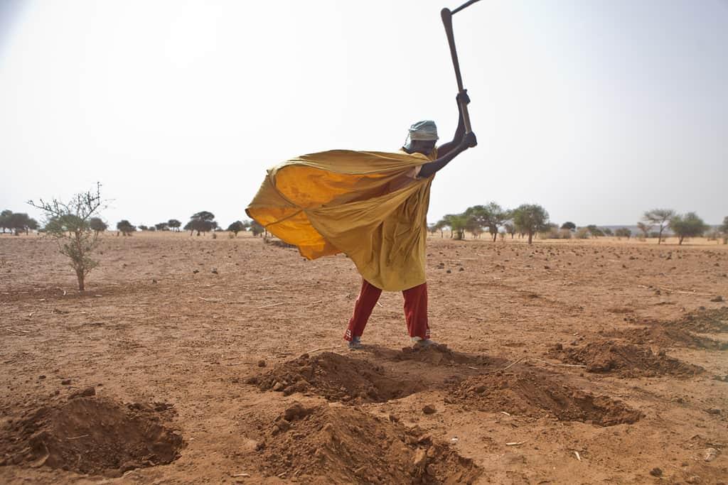 Неплодородната земя, полупустинният климат, недостигът на вода правят много труден живота на хората в Нигер. Снимка: thebronxpapers