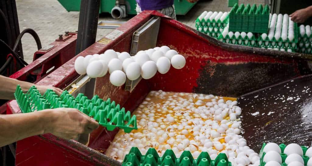 Унищожаването на съдържащите опасния пестицид яйца продължава с пълна пара. Снимка: EFE