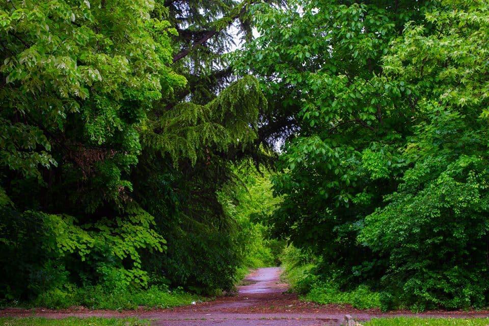 """Парк """"Бедечка"""" - неподдържан от общината в продължение на две десетилетия, но все още приятно място за разходка. Снимка: Запазете Бедечка"""