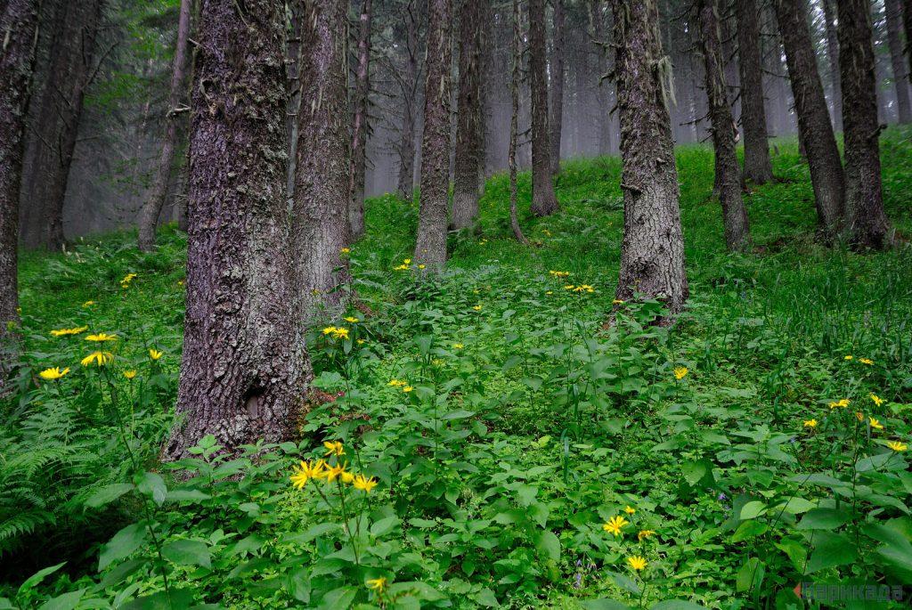 """Мурова гора в НП """"Пирин"""". Снимка: Барикада"""