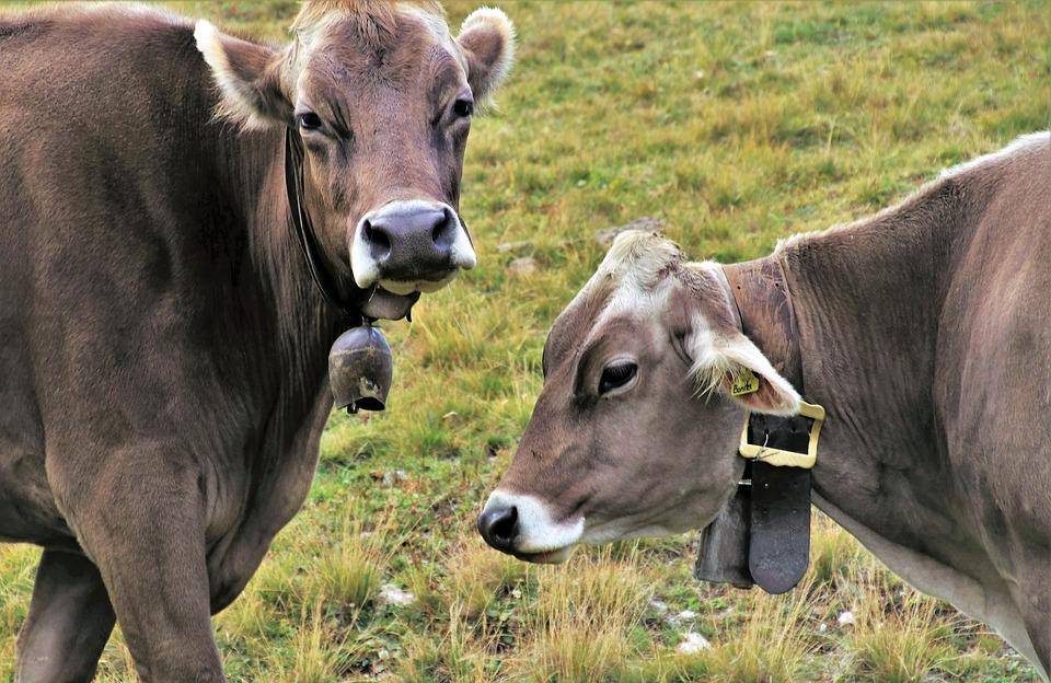 Споразумението за млечните продукти бе представено за голям успех. Тези стоки обаче съставляват едва 0.06% от общата търговия между САЩ и Канада. Снимка: pixabay.com
