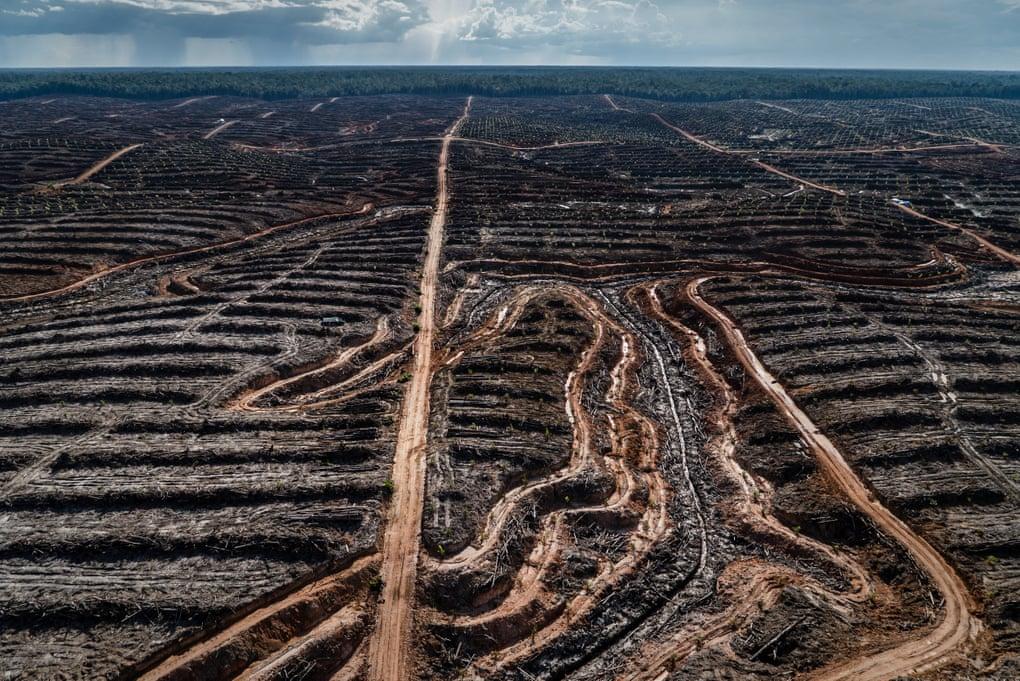 В Индонезия огромни горски масиви изчезват, за да освободят терен за производство на палмово масло. Снимка:  Ulet Ifansasti/Greenpeace