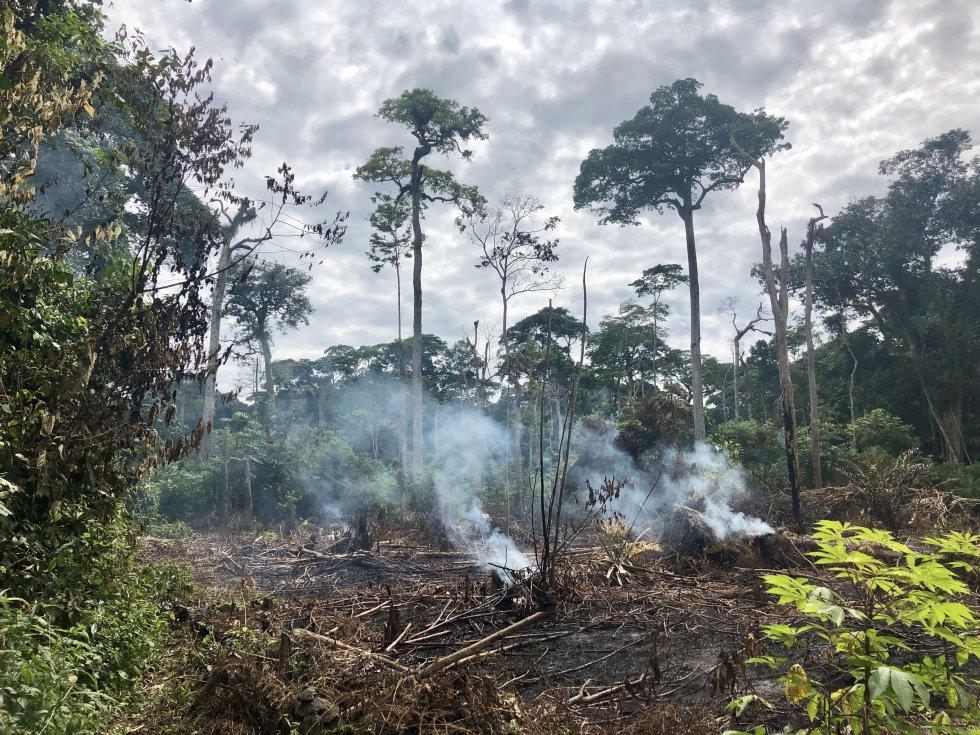 """Пожарите в Янгамби най-често са следствие от селскостопанска дейност от типа """"събирай реколтата и после пали"""". Снимка: Глория Паярес, El Pais"""