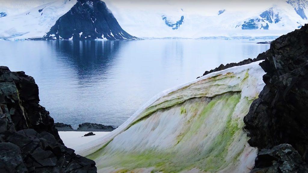 Зеленият цвят избива върху все повече снежни площи в Антарктида. Снимка: cam.ac.uk