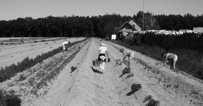 coronavirus-farm-harvest