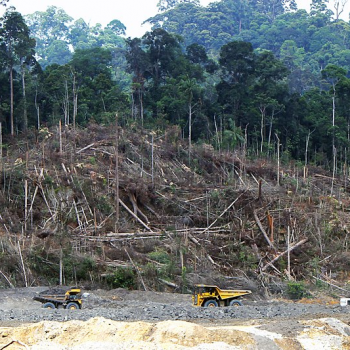 Screenshot_2021-04-16 File Deforestation in Borneo jpg - Wikimedia Commons