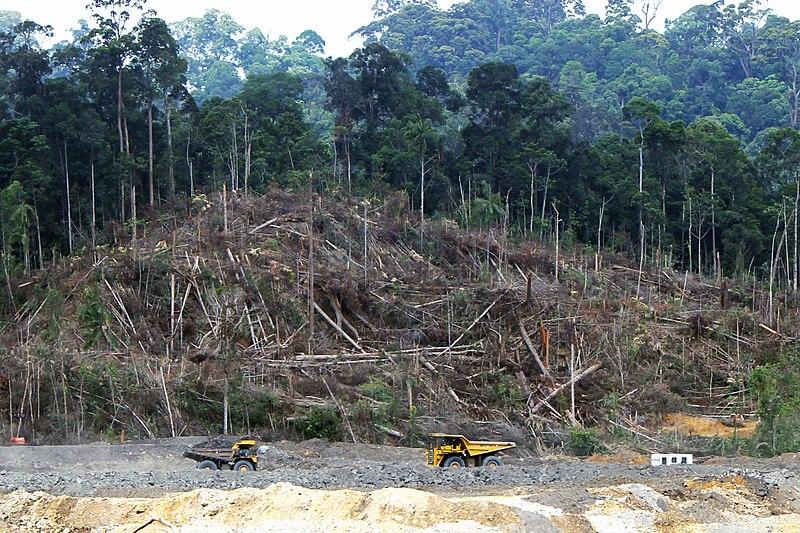 Screenshot_2021-04-16 File Deforestation in Borneo jpg - Wikimedia Commons